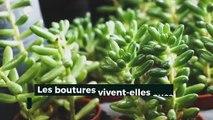 News_Sciences_et_Vie_19/06/2019_CO