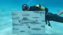 À Cuba, Sandor Gonzalez peint à plusieurs mètres de profondeur