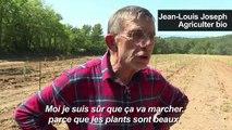 Pistaches, origine France : le pari d'agriculteurs en Provence