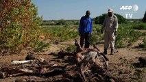 Au Botswana, la levée de l'interdiction de la chasse à l'éléphant divise
