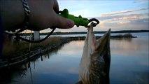 MCH 106 FISHING HOLE CATCH AT GULL LAKE ALBERTA CANADA.