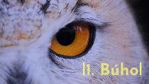 8 animales con mejor sentido del oído