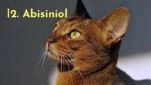 Las 5 mejores razas de gato