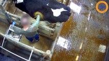 L214 et Nagui dénonce le  terrible destin des animaux d'un centre de recherche !