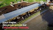 """Les """"vaches à hublot"""" : une pratique dénoncée par L214"""