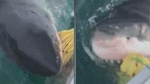 Des pêcheurs se font surprendre par un grand requin blanc monstrueux
