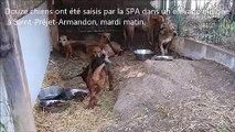 Douze chiens saisis dans un élevage de Saint-Préjet-Armandon (43)