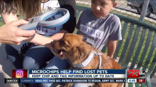 Dog rescue pushing tiny technology to help reunite lost pets and owners