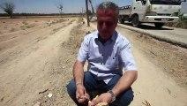 Syrie: après les années de guerre, la longue reconstruction du verger de Damas