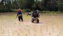 Predator Finds Harvesting Rice More Difficult than Harvesting Humans