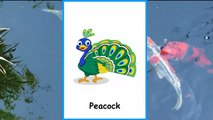 Birds Names for Children in English | Names of Birds for