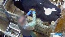 """""""Vaches à hublot"""" : L214 dénonce les conditions de vie d'animaux d'élevage dans une vidéo"""