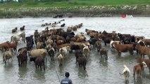 Sıcaktan bunalan hayvanlar suda serinliyor