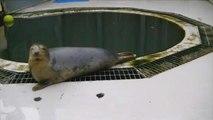 Seal Learns to Sing 'Twinkle Twinkle Little Star'