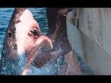 47 Meters Down: Uncaged - Full Movie Trailer in HD - 1080p