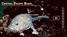 "Creatures Found by NOAA's Deep Ocean Explorer ""Okeanos"""