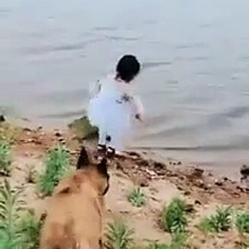 Cute dog saved the life of girl see this video