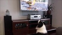 Funny Dogs Watching TV  Funny Pets Watching TV (Part 1) [Epic Laughs]