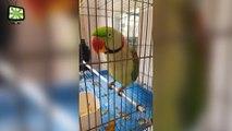 Funny Parrots Dancing  Crazy Parrots Talking (Full) [Epic Laughs]