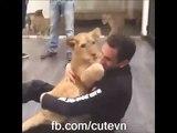 Gros calin entre un homme et un lionceau... Adorable
