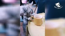 Funny cats -  The Best Videos of Funny Cats / Gatos Graciosos - Los Mejores Videos de Gatos Chistosos