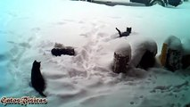The most fun cats playing in the snow. Videos to die of laughter - Los Gatos más Divertidos Jugando en la Nieve. Videos Para Morir de la Risa.