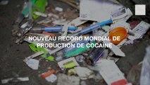 Nouveau record mondial de production de cocaïne