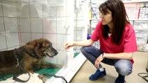 Canicule : ce qui doit vous alerter chez votre animal domestique