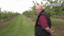 Pour la location de ses terres, Elizabeth II touche les subventions de la PAC