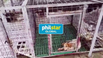 WATCH: Around 100 stray dogs to be euthanized now up for adoption