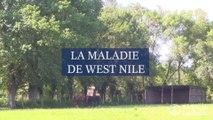 La maladie de West Nile