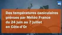 Des températures caniculaires attendues en Côte-d'Or