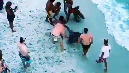 Des hommes sauvent un requin marteau échoué sur une plage