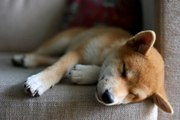 6 Dog Breeds You Can Leave Home With No Guilt