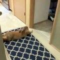 Cette lapine ne veut pas se lever de son palier. Trop drôle !