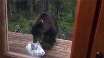 Ce pauvre ours va avoir la peur de sa vie