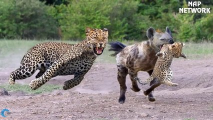 The God can't help Mother Leopard save Cubs escape of Hyena