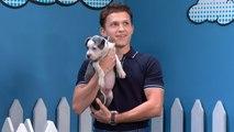 Rescue Dog Rescue With Tom Holland: Superhero Edition