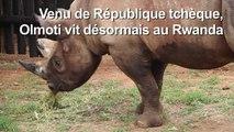 Cinq rhinocéros d'un zoo tchèque réintroduits au Rwanda