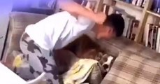 Un adolescent de 18 ans filmé en train de frapper brutalement son chien, sans raison.