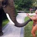 Un éléphant coquin