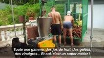 """Le """"vin"""" de rhubarbe, des Vosges aux palaces parisiens"""