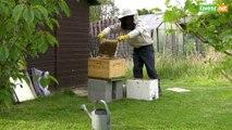L'Avenir - Accueillir une ruche dans son jardin