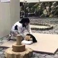Trop mignon !! Cette femme met un panda endormi au lit.