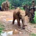 Quand un petit éléphant s'amuse avec des chiens, voici ce que donne !