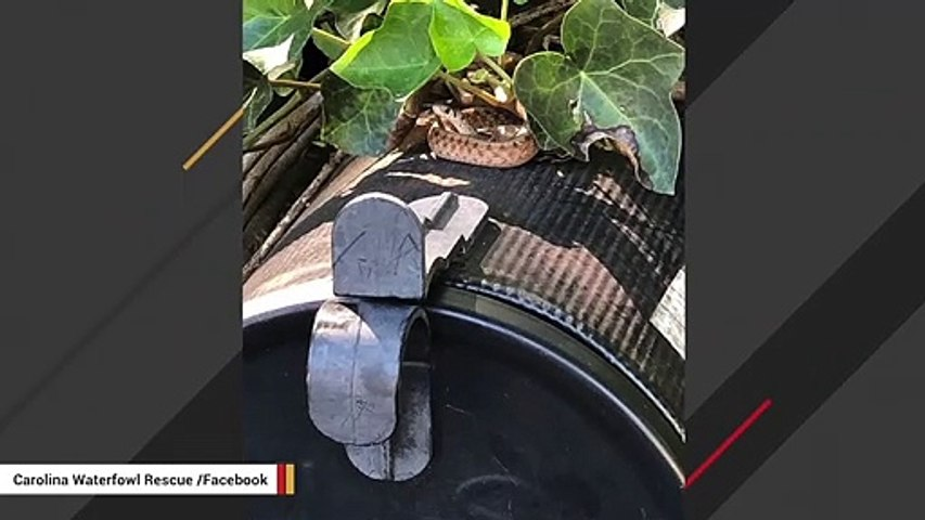 Mailman Spots A Snake Relaxing On Mailbox
