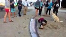 Ils découvrent une créature marine de plus de 8m de long sur une plage de Californie.