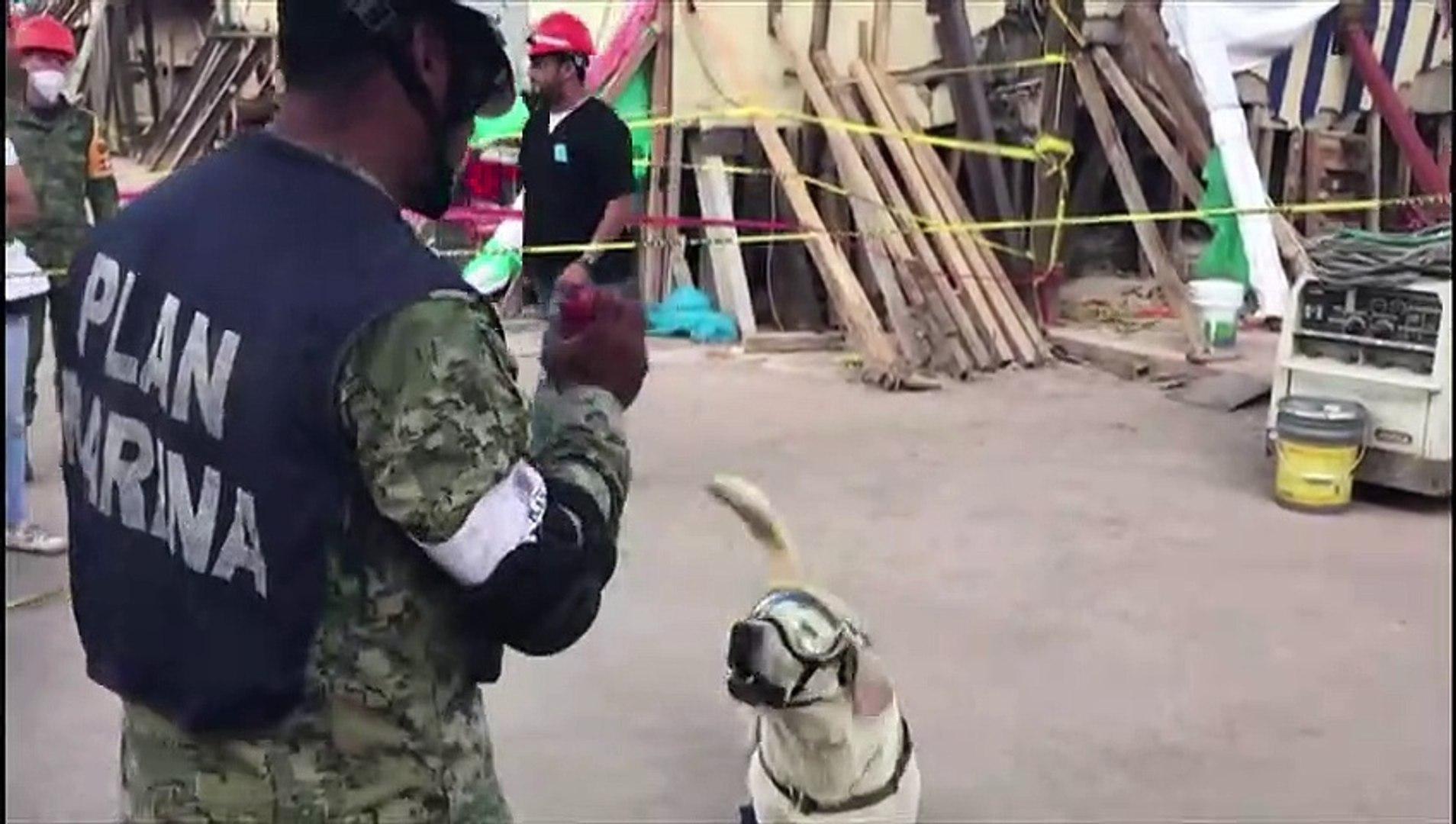 Frida, a cadela 'heroína', se aposenta
