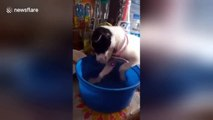 Adorable tiny puppy fails to stay awake during bath time