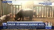 En pleine canicule au zoo de Beauval, les animaux sont arrosés pour les rafraîchir
